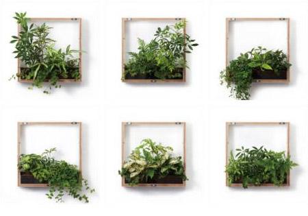 マイギャラリーのグリーンは6種類